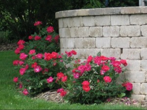 stone walls and roses